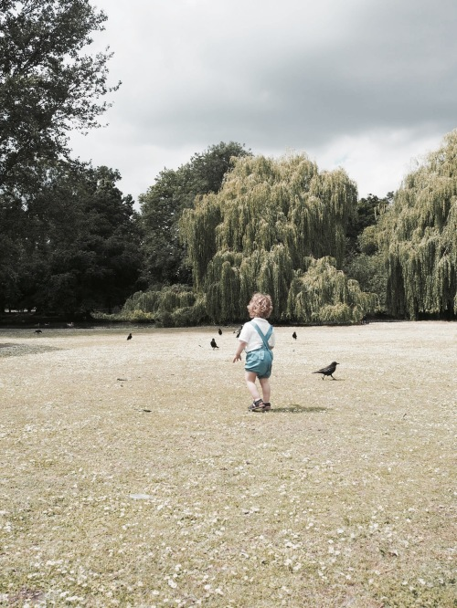Off he goes, chasing ducks for lunch in Regent's Park